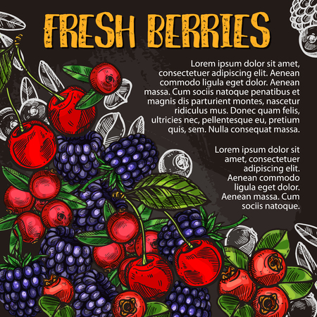 Fresh berry and fruit chalk sketch poster on blackboard. Cherry, blackberry and cranberry fruit with green leaf on chalkboard for fruit drink, dessert and natural juice menu board design