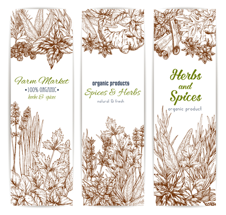 Herbs and spices. Vector banners set of sketch oregano, dill and parsley, cinnamon, lavender and cilantro. Basil seasoning and ginger, rosemary or cloves or tarragon. Sage and bay leaf, thyme dill and cinnamon Ilustrace