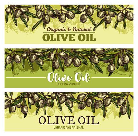Olive oil banner with border of fresh green olives. Olive fruit, tree branch and green leaf sketch label for extra virgin oil bottle and natural organic food packaging design