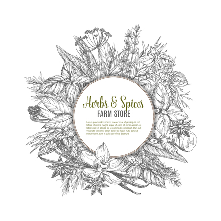 Herbs and spices store sketch poster. Organic mint and rosemary, basil, thyme, parsley, bay and anise star, dill and ginger, cinnamon, oregano and vanilla, marjoram. Natural cooking ingredient design Illustration