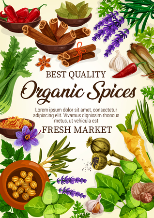 Organic spices herbs and plants. Vector chili pepper, onion leek or anise and oregano, thyme and rosemary, basil and dill, parsley, cumin and vanilla, lavender. Spice for cooking and seasoning Illustration