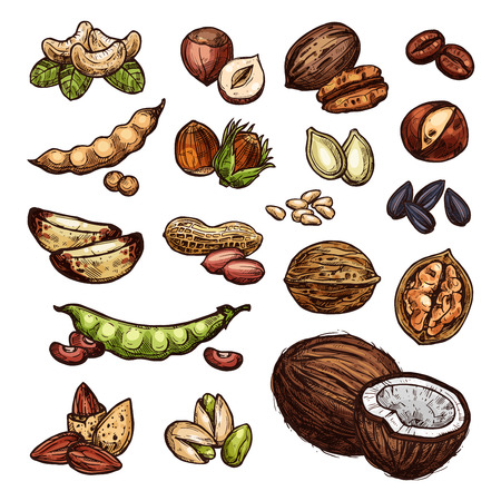 Nuts and beans sketch organic farm coconut, peanuts, pistachios and walnuts. Vector isolated nuts harvest of sunflower seeds, cashews or almonds and filbert nut Stock Illustratie