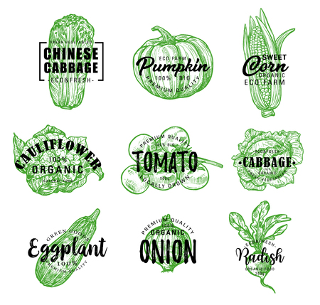 Vegetables sketch lettering for farm market or vegetarian and vegan store or cafe. Vector organic Chinese cabbage napa, pumpkin or corn and cauliflower, tomato with eggplant and onion or radish Illustration