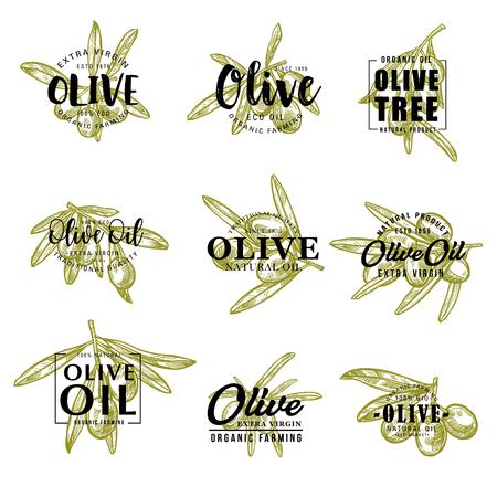 Groene olijven schets belettering voor olijfolie productpakket of boerderijmarkt. Vectorkalligrafieontwerp van olijfboomtakken met fruitoogst voor Italiaanse, Spaanse of Mediterrane keuken Vector Illustratie