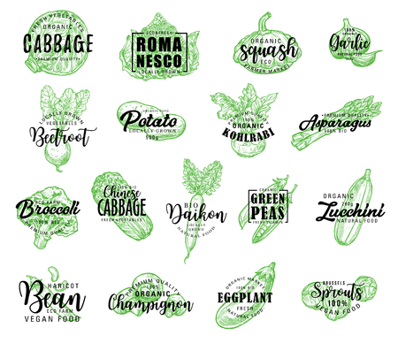 Vegetables, salads and greenery sketch lettering. Vector calligraphy icons of cabbage, romanesco lettuce or squash and garlic, farm beetroot, potato or kohlrabi and asparagus with bio broccoli and daikon