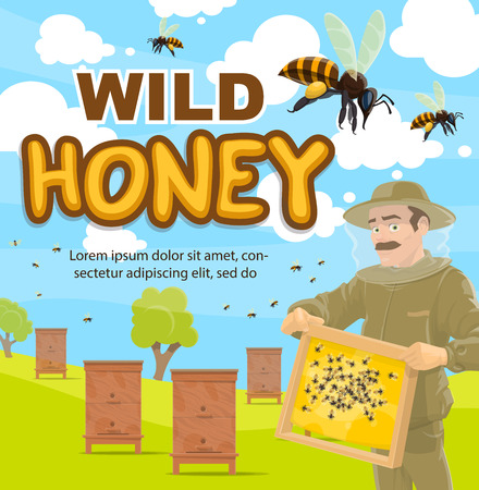 wild honey beekeeping poster of beekeeper at apiary with honeycomb. Vector cartoon design of man in protective outfit taking honey from beehives with bees swarm around Imagens - 108968539
