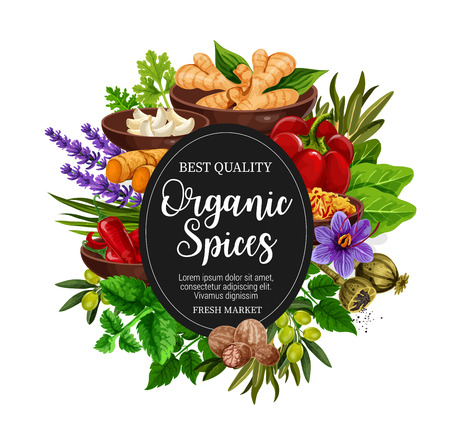 Organic spices and herbal seasonings poster. Vector design of ginger root, chicory or lavender and nutmeg, natural peppermint, garlic and olives with chili pepper or turmeric and sage or bay leaf