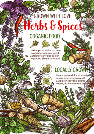 Herbs and spices organic food poster for organic cooking ingredients. Vector sketch ginger, radish or chili pepper and lavender, anise seeds or cinnamon with oregano, basil and cumin or tarragon Çizim