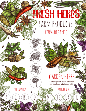 Herbs and spices vector banner. Sketch set of chili pepper and cinnamon, basil or oregano leaf for salad dressing, onion leek and ginger, aroma peppermint or vanilla and garlic with dill and arugula