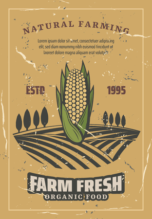 Corn harvest, retro style vector. Natural farming and agriculture harvest. Organic corncob or vegetarian and vegan vegetable food on plant fields with trees