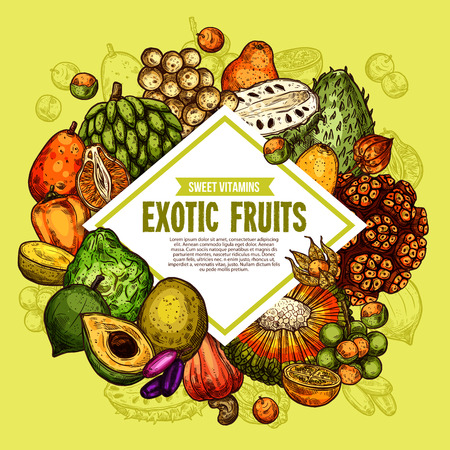 Exotic tropical fruits harvest. Vector bergamot, physalis or lucuma fruit and longkong, soursop apple or mombin and pandan or tangerine with naranjilla and jambolan sketch Archivio Fotografico - 128161346