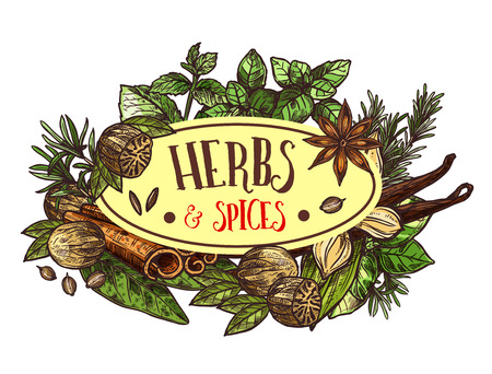Herbs and spices symbol for seasoning or condiments. Rosemary and thyme, basil and mint, sage and bay leaf, nut and oregano, seeds and cinnamon sticks. Fragrant plants for cooking vector isolated Çizim