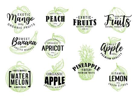 Letras de bosquejo de frutas tropicales exóticas. Caligrafía de vector de mango, melocotón o plátano y albaricoque, manzana orgánica con piña, sandía y fruta cítrica de limón