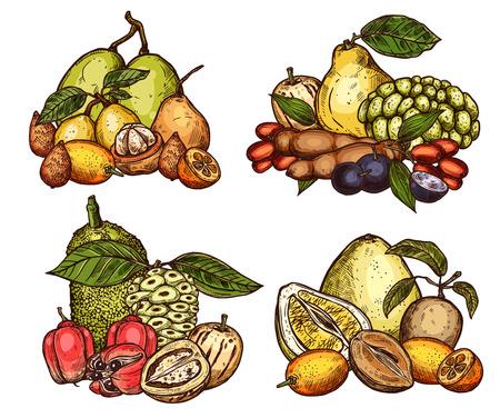 Exotic tropical fruits harvest. Vector sketch of pomelo citrus, jackfruit or tamarind and salak or ackee apple, organic sapodilla, ambarella or pepino, jabuticaba fruits and kumquat Ilustracja