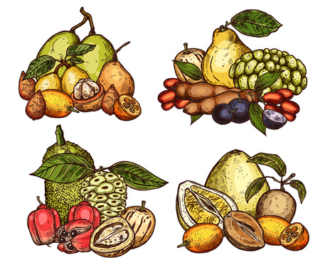 Exotic tropical fruits harvest. Vector sketch of pomelo citrus, jackfruit or tamarind and salak or ackee apple, organic sapodilla, ambarella or pepino, jabuticaba fruits and kumquat Illustration