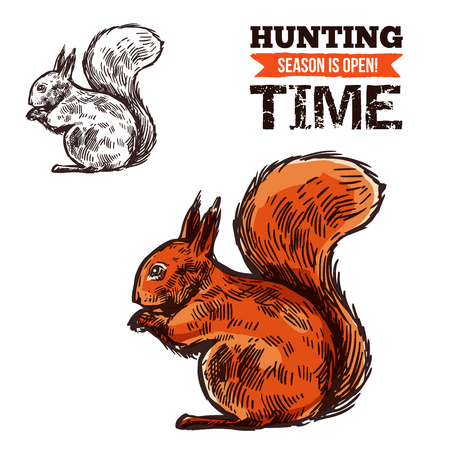 Squirrel animal sketch, hunting open season or hunter society and hunt club theme. Vector isolated wild forest squirrel, animal hunt adventure