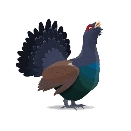 Grouse bird cartoon icon. Vector isolated wild forest blackcock bird for zoo, zoology or hunting open season theme