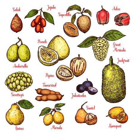 Exotic tropical fruits sketch. Vector isolated salak, jujube or sapodilla and ackee apple, ambarella or pepino fruit and jackfruit, tamarind or jabuticaba and kumquat or santol Stock Vector - 109343895