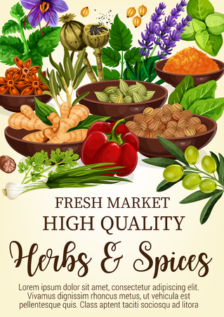 Herbs and spices poster with condiments in bowls. Ginger and cinnamon stars, bay leaves and lavender, olive and bell pepper. Piquant curry and mint, leek and parsley, poppy from market vector Illustration
