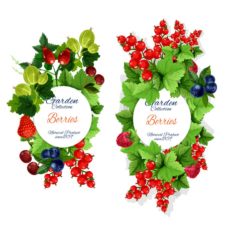 Berries and berry fruits, organic farm harvest. Vector blueberry, blackberry or black and red currant with strawberry, raspberry and gooseberry, cherry and briar fruits