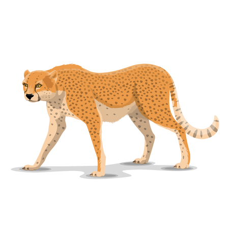 Cheetah animal cartoon character. Vector isolated African wild cougar or guepard and leopard feline species. Africa zoo, zoology or hunting Safari open season theme
