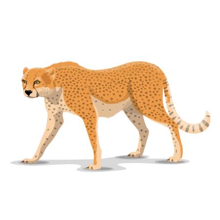 Postać z kreskówki gepard. Wektor izolowane afrykańskie dzikie puma lub gatunki kotów guepard i lamparta. Afrykańskie zoo, zoologia lub polowanie Motyw otwartego sezonu Safari