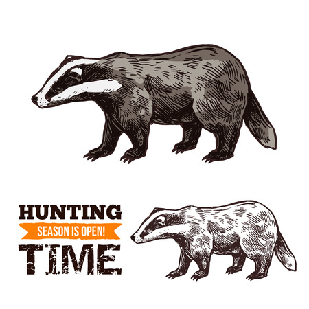 Badger animal sketch, hunting open season or hunter society and hunt club theme. Vector isolated wild forest badger, animal hunt adventure Zdjęcie Seryjne - 109367918