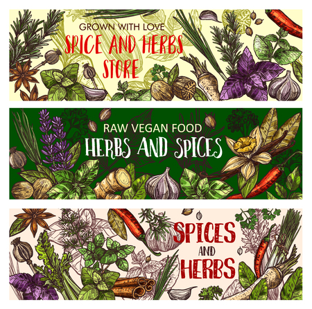Spice and herbs store, vegan food seasonings. Vector sketch basil, vanilla, ginger and chili pepper with garlic, organic parsley or dill and lavender. Healthy cooking and condiment