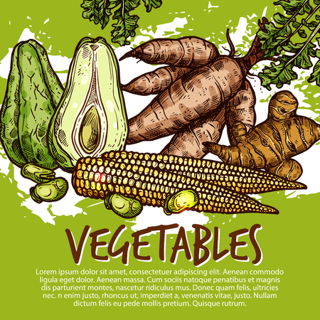 Vegetables and exotic veggies or edible roots. Vector organic sweet potato, avocado or legume beans and cassava tuber, ginger or jicama and yam turnip. Farm market theme