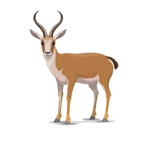 Goitered gazelle dierlijk karakter. Vector geïsoleerde cartoon Afrikaanse wilde gazelle soorten met lange hoorns. Dierentuin, zoölogie of jacht open seizoen en Safari-thema Stockfoto - 109486142