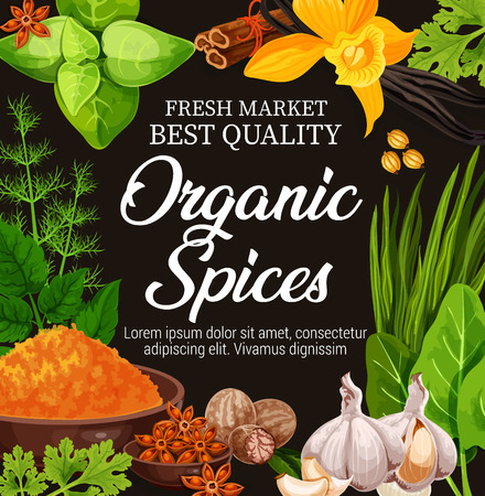 Organic spices, seasoning herbs and herbal flavorings. Cooking or farm market. Vector garlic, vanilla or turmeric curcuma, dill with mint and nutmeg, star anise or cinnamon and sorrel Illustration