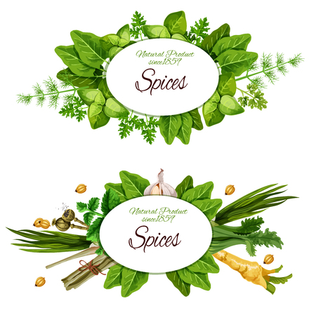Spices, herbs and organic seasonings. Vector farm market sorrel, dill or parsley and leek, natural radish and poppy seeds, spinach or peppermint with garlic Ilustracja