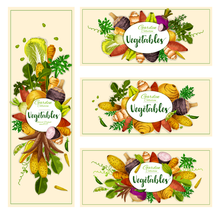 Vegetables and exotic farm veggies banners. Vector natural vegan organic potato, radish or turnip and legume bread beans, artichoke with jicama, yam and cassara tuber