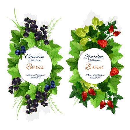 Berries and berry fruits, organic farm market or juice package design. Vector blueberry and black and red currant, strawberry, gooseberry and briar harvest Illusztráció