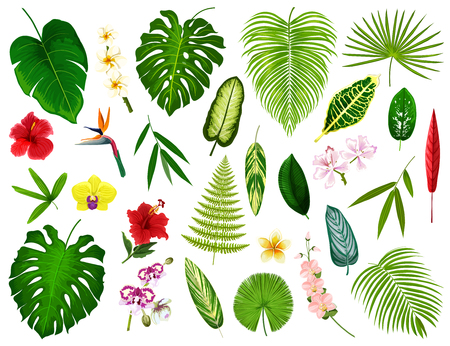 Tropical leaf and flowers. Vector exotic hibiscus, banana palm or monstera leaf and fern plant, cyperus or orchid and plumeria blossom with spath or peace lily and bamboo