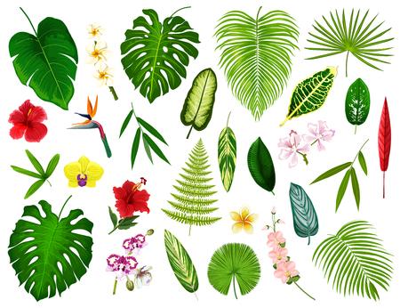 Hojas y flores tropicales. Vector exótico hibisco, palma de plátano o hoja de monstera y planta de helecho, cyperus u orquídea y flor de plumeria con spath o lirio de la paz y bambú