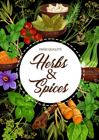 Seasoning herbs and spices or condiments. Vector rosemary and thyme, basil, dill and parsley, sage and bay leaf, onion and oregano, ginger and vanilla or mint, cinnamon, garlic and chili pepper Ilustracja