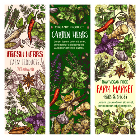 Herbs and spices vector banners. Sketch set of cinnamon, basil or oregano leaf for salad dressing, onion leek and spicy rosemary, aroma peppermint or lavender and lemongrass with tarragon and arugula Ilustração