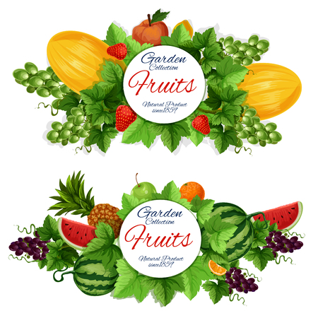Organic farm fruits. Vector agriculture harvest, greengrocery market melon and watermelon, apple and orange, pineapple and grape, strawberry and lemon, leaves and peach