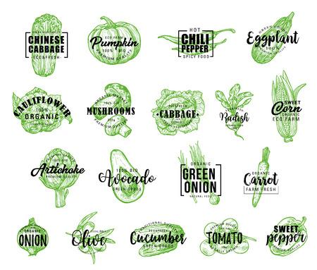 Icônes de légumes avec lettrage, vecteur. Chou chinois et potiron, piment, aubergine, chou-fleur et champignons, chou, radis, maïs et artichaut. Avocat, oignon et vecteur de carotte Vecteurs