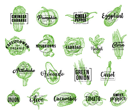 Vegetables icons with lettering, vector. Chinese cabbage and pumpkin, chili pepper, eggplant, cauliflower and mushrooms, cabbage, radish, corn and artichoke. Avocado, onion and carrot vector Çizim