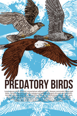 Birds of prey or predatory birds sketch. Vector raptor eagle vulture, falcon and hawk flying in sky wit spread wings. Ornithology or zoo design and wild nature protection