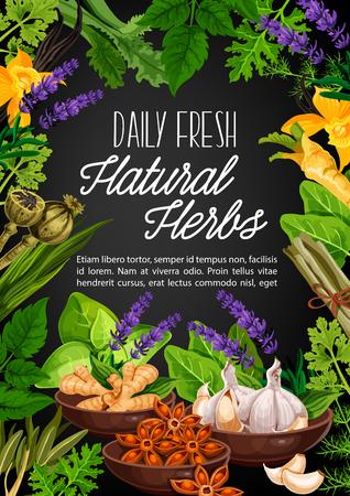 Naturalne zioła i organiczne przyprawy do gotowania. Wektor mak, korzeń imbiru lub chrzan i anyż w misce, aromat lawendy lub przyprawa czosnku i gałki muszkatołowej z selerem i szpinakiem