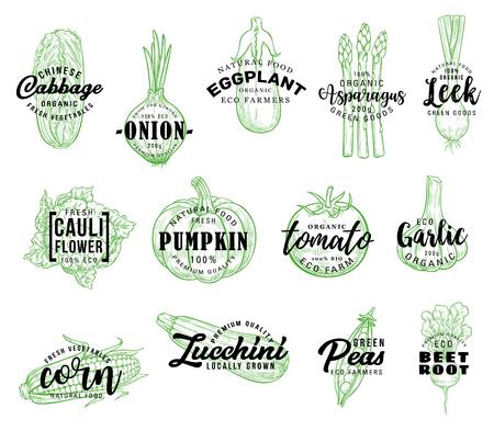Gemüse und natürliches Gemüse Vektorbeschriftung. Skizze Chinakohl, Zwiebel oder Aubergine und Spargel mit Bauernlauch, veganem Blumenkohl, Kürbis oder Tomate und Knoblauch mit Mais