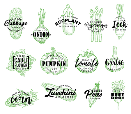 Vegetables and natural veggies vector lettering. sketch Chinese cabbage, onion or eggplant and asparagus with farm leek, vegan cauliflower, pumpkin or tomato and garlic with corn 스톡 콘텐츠 - 110426809