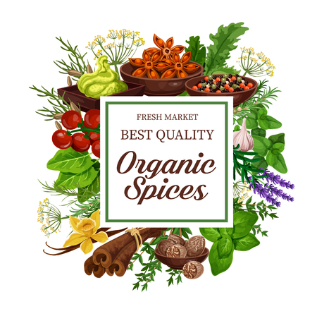 Spices and herbs of organic seasonings. Vector wasabi, anise or tomato and basil, vanilla or ginger and chili pepper with garlic, parsley or dill and lavender, for cooking book cover Illustration