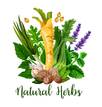 Natural herbs and organic cooking seasonings spices, vector. Horseradish, lavender flavoring or garlic and nutmeg spice, onion leek with celery and peppermint, sage and bay leaf