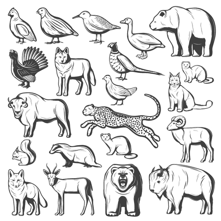 Wild animals and birds, hunting sport. Vector monochrome bear, wolf and cheetah, buffalo, lynx and bison, pheasant, quail and goose, gazelle, grizzly and fox, squirrel, mink and sable 일러스트