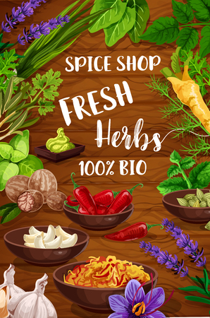 Herb and spice vector condiments, culinary plants and aromatic flowers. Garlic, green basil and rosemary, parsley, pepper and oregano, onion, sage and bay leaf, dill, lavender and mint seasonings