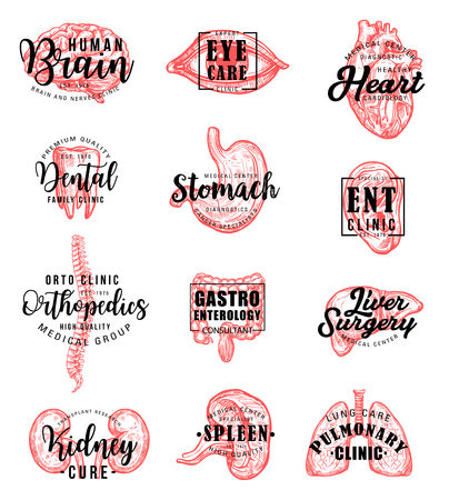 Human body organs sketches with hand drawn lettering, medical clinic or dentistry emblem design. Brain, heart and lungs, liver, kidney and tooth, eye, spine and ear, spleen, stomach and intestine Illustration